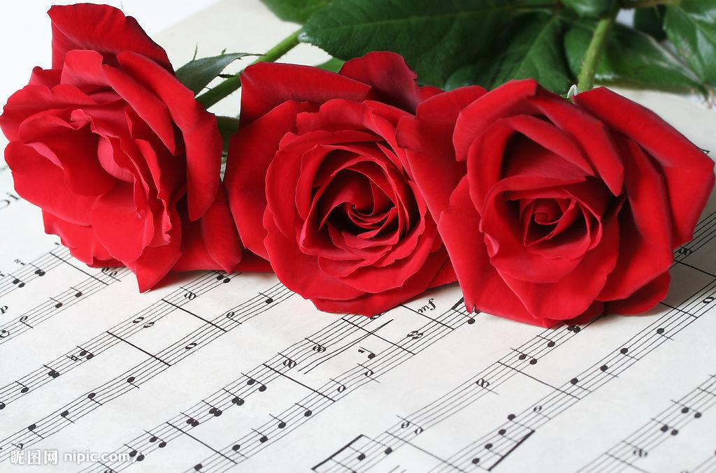 福山卷心玫瑰折法图解